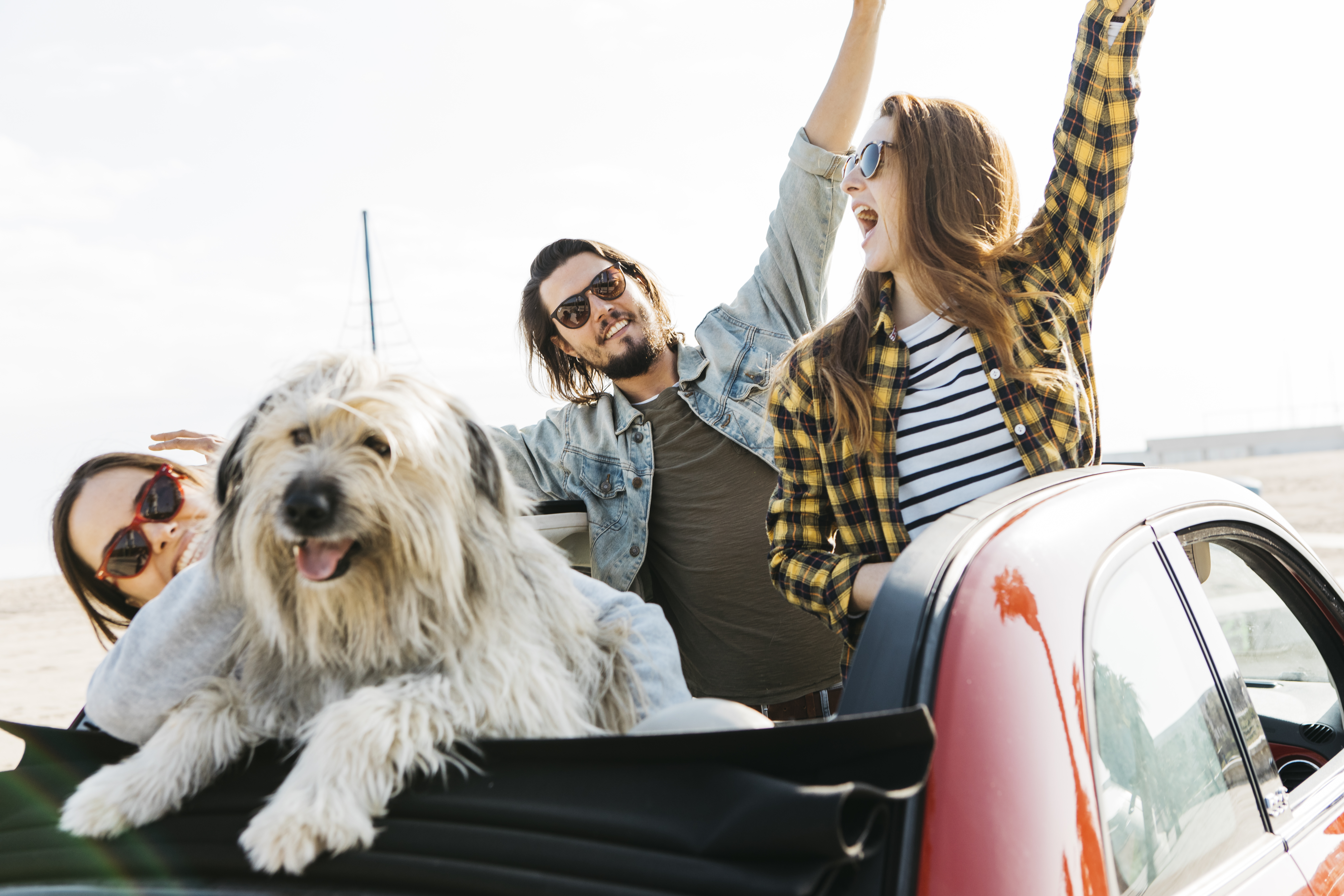 Family traveling with the dog