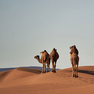 Traghetti per il Marocco: Guida, informazioni e Curiosità