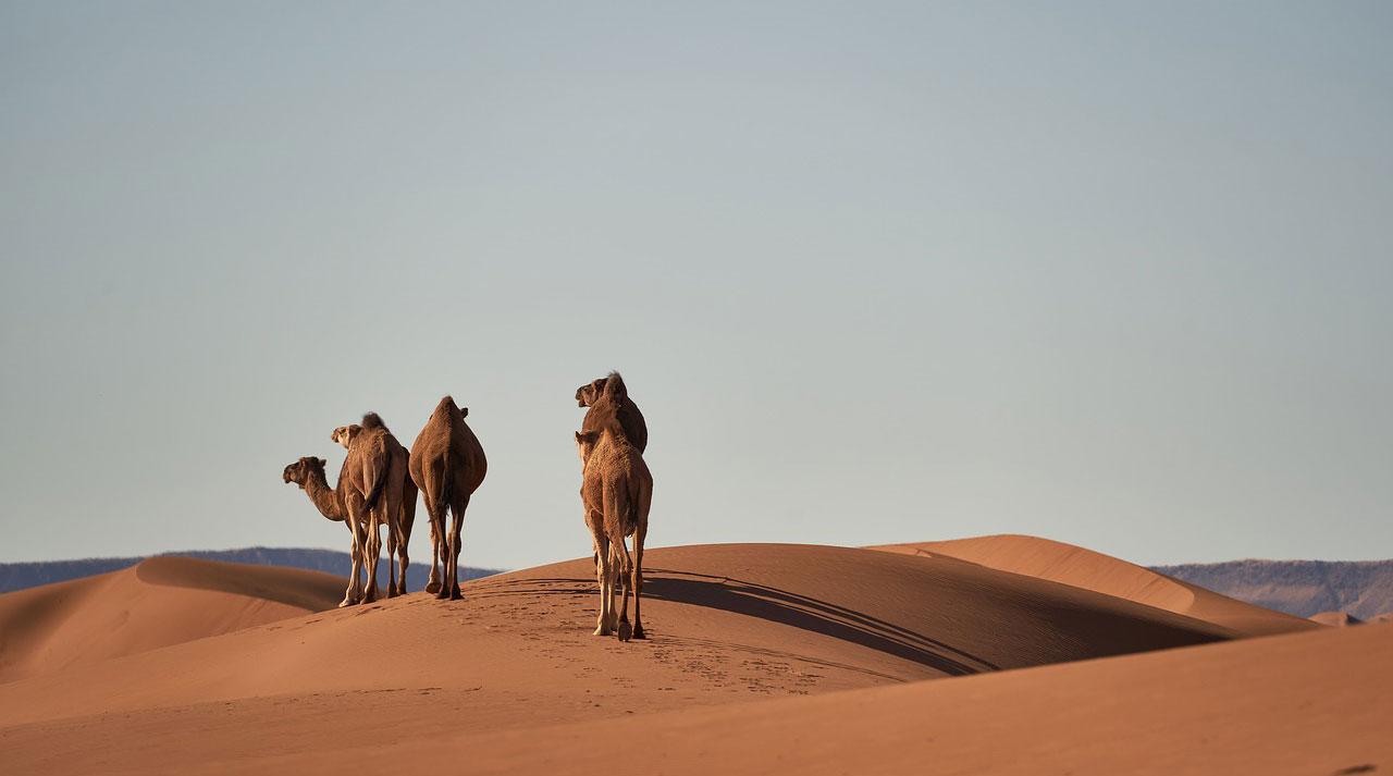 Traghetti per il Marocco